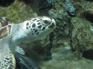 A Sea Turtle At The Blue Zoo